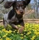 Tapsiger Hundewelpe
